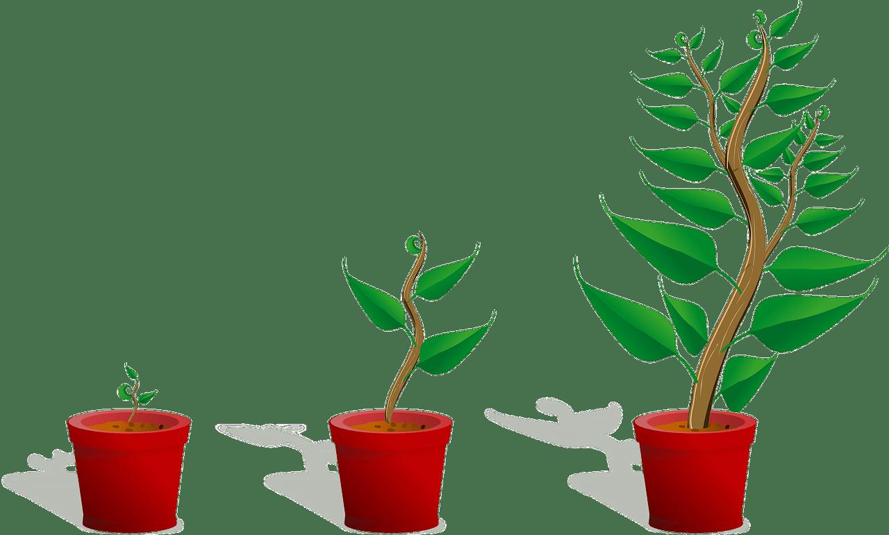 bedrijf laten groeien tips